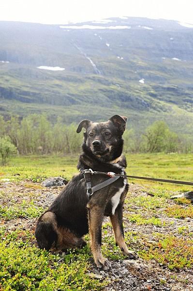 Nasz czytelnik szuka psa. Pomóżcie!