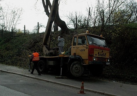 Przycinają gałęzie drzew
