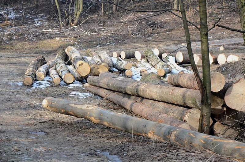 Kradną drzewo z lasów