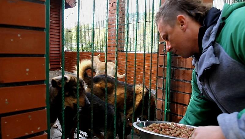 Wolontariusze z pomocą zwierzętom
