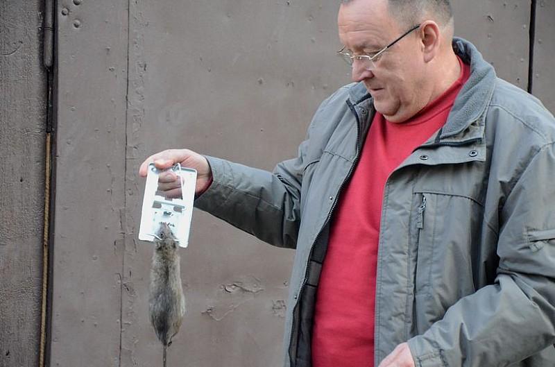 Szczurzy terminator