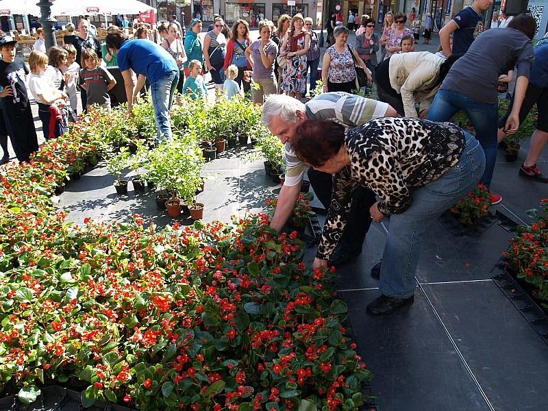 Herb Wałbrzycha z kwiatów