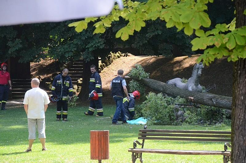 Potężne drzewo zabiło dziewczynkę