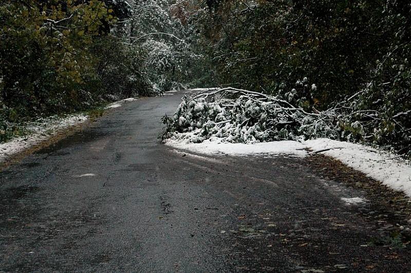 Śnieg powala drzewa na drogi