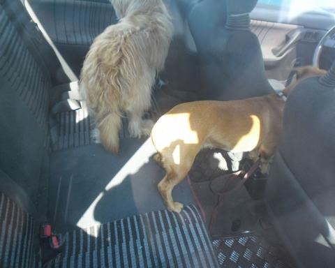 Mandat za pozostawienie psów
