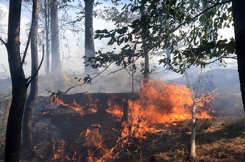 Wielki pożar lasu - zobacz zdjęcia