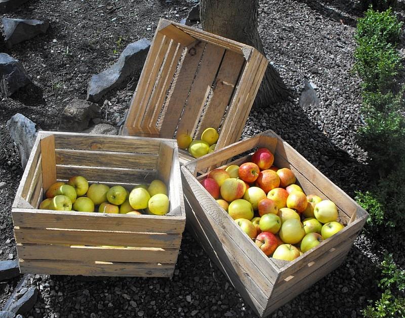 Jabłka w